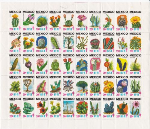Cactus mexicanos
